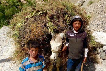 Boys with Donkey - Tajikistan facts