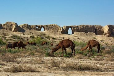 Merv ancient ruins camels - Turkmenistan