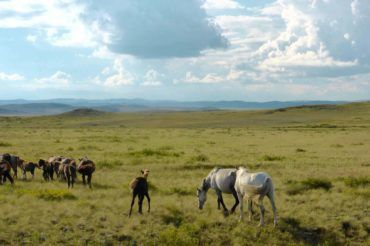 horses gazing in vast steppes of Kazakhstan tour