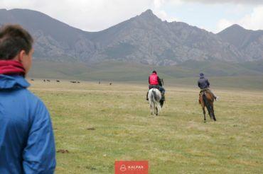 Kyrgyzstan horses