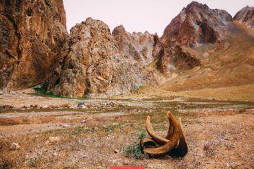 Marco Polo horn, Tajikistan
