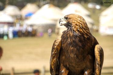 eagle in Kyrgyzstan