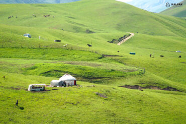 yurts in green pasture