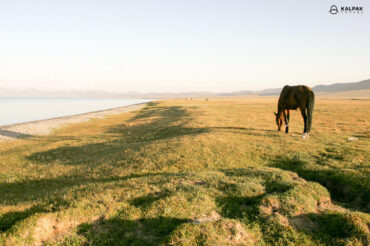 horse grazing at the lake