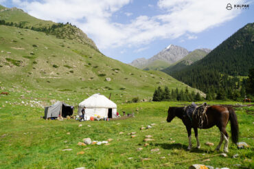 horse and yurt in nature