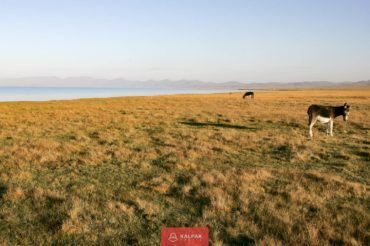 nature Kyrgyzstan