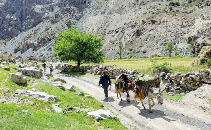 Donkeys in Tajik village
