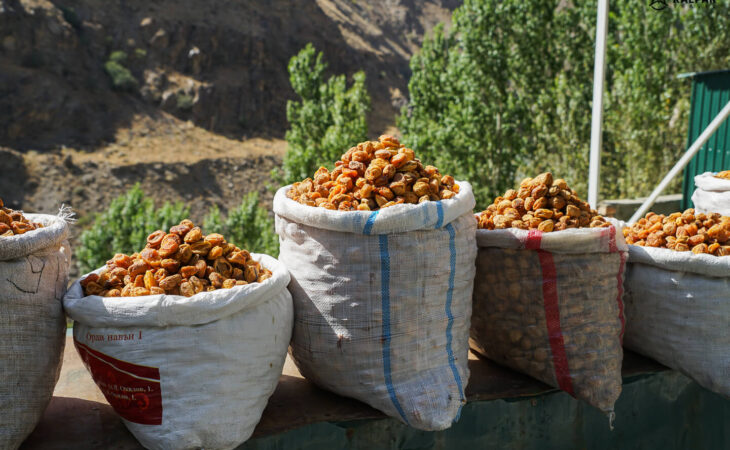 Tajikistan dried apricots in the mountains