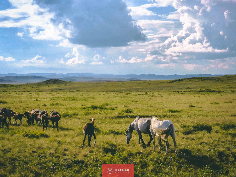Centrral Asia, horse riding