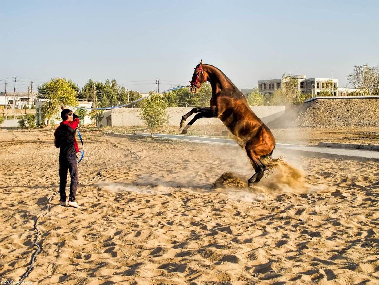 famous horse of Turkmenistan