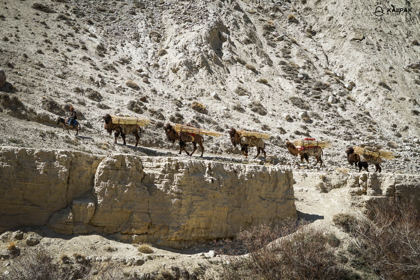 Camels on the Pamir Highway as in the times of the Silk Road trade